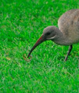 Γιγαντιαίο πουλί τέρας