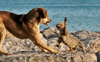 Von Hunden und Katzen